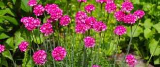 Цветы, которые цветут весь сезон: Топ-7, с фото и названиями